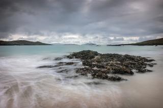 Seaweed scene