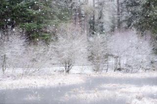 Snowing at Loch Dunmore