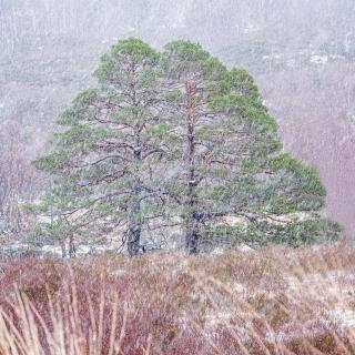 Torridon February weather